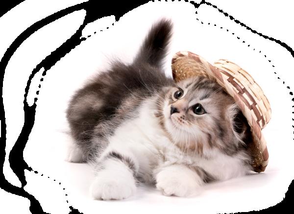 Résultat d'images pour Gifs chats